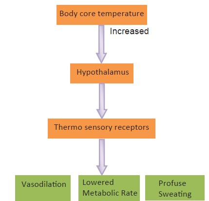 Figure 1: Thermoregulatory mechanism of elevated body temperature